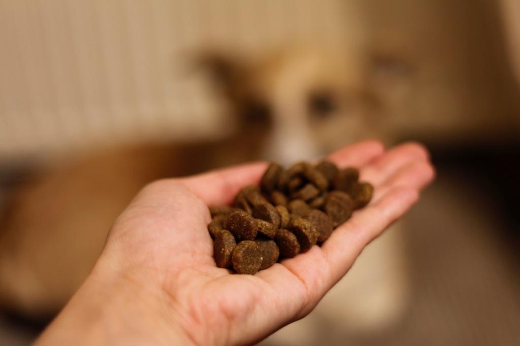 Na wyciągniętej dłoni leży karma dla psa ACANA Singles w formie brązowych granulek