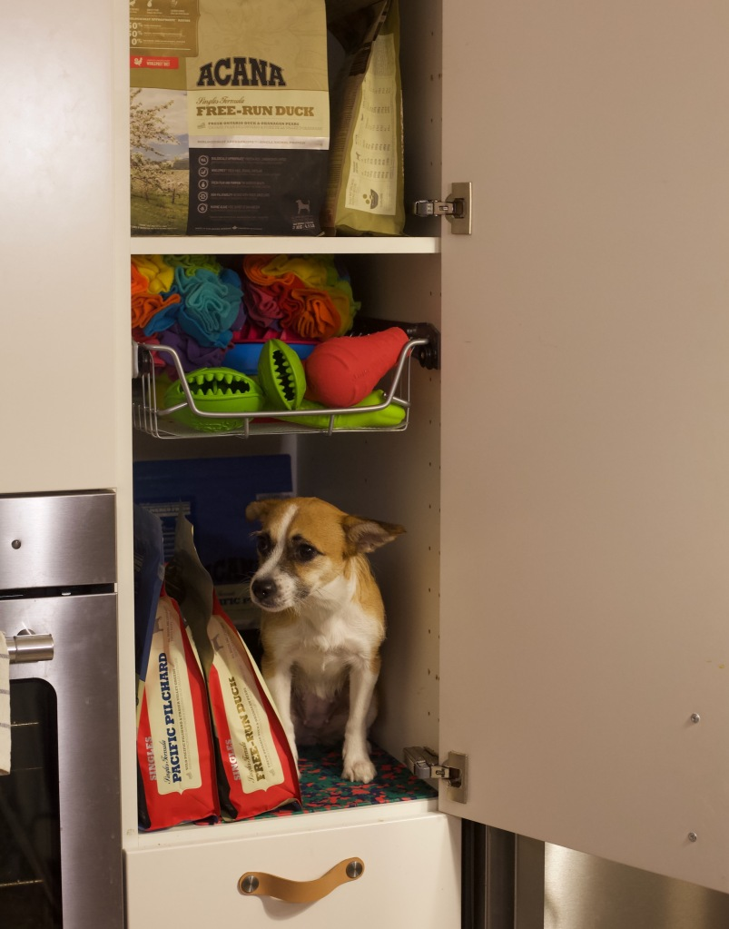 Na półce w szafce kuchennej siedzi pies a obok niego karma dla psa ACANA w paczkach
